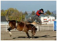 A man riding a bucking bronc