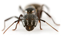 A close up of an ant